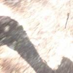 Profilbild von Sebastiano